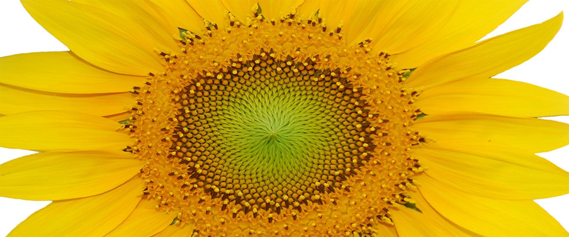 Header regenerative Energien